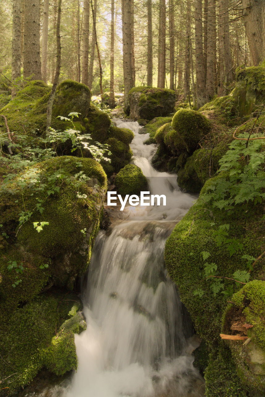 forest, waterfall, tree, nature, scenics, long exposure, beauty in nature, motion, blurred motion, no people, tranquil scene, woodland, water, river, moss, day, outdoors, landscape, freshness