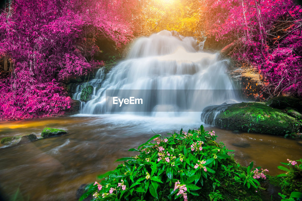 water, plant, motion, long exposure, beauty in nature, waterfall, scenics - nature, flowing water, tree, nature, blurred motion, no people, flower, flowering plant, growth, flowing, forest, multi colored, freshness, outdoors, power in nature, rainforest