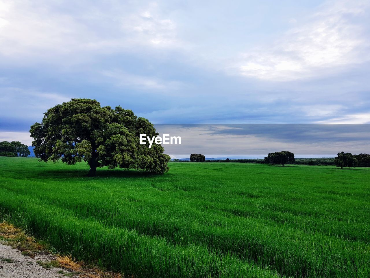 plant, cloud - sky, sky, green color, tranquil scene, landscape, beauty in nature, scenics - nature, land, environment, tranquility, field, growth, tree, grass, nature, agriculture, rural scene, no people, day