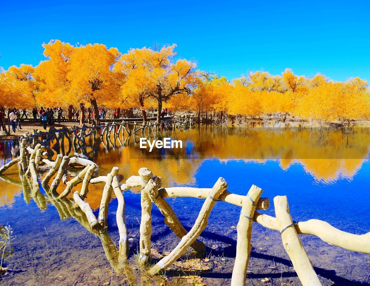 tree, water, autumn, nature, reflection, plant, lake, sky, day, beauty in nature, change, tranquility, no people, scenics - nature, tranquil scene, orange color, outdoors, non-urban scene, leaf