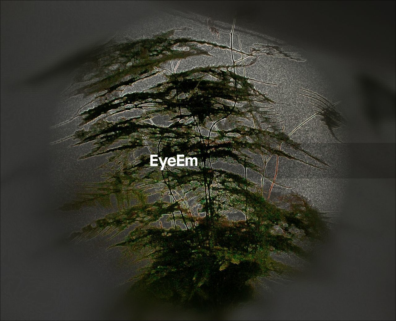 growth, nature, plant, tree, no people, day, outdoors, beauty in nature, tree trunk, branch, close-up
