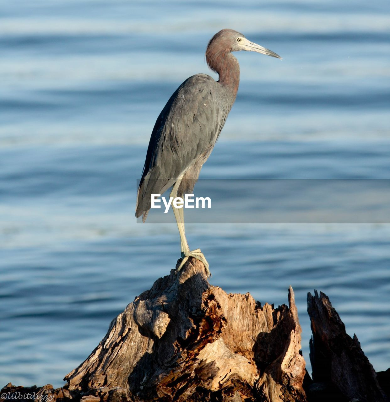 bird, animals in the wild, one animal, rock - object, heron, animal themes, nature, animal wildlife, water, gray heron, day, perching, outdoors, no people, sea, beak, beauty in nature, close-up