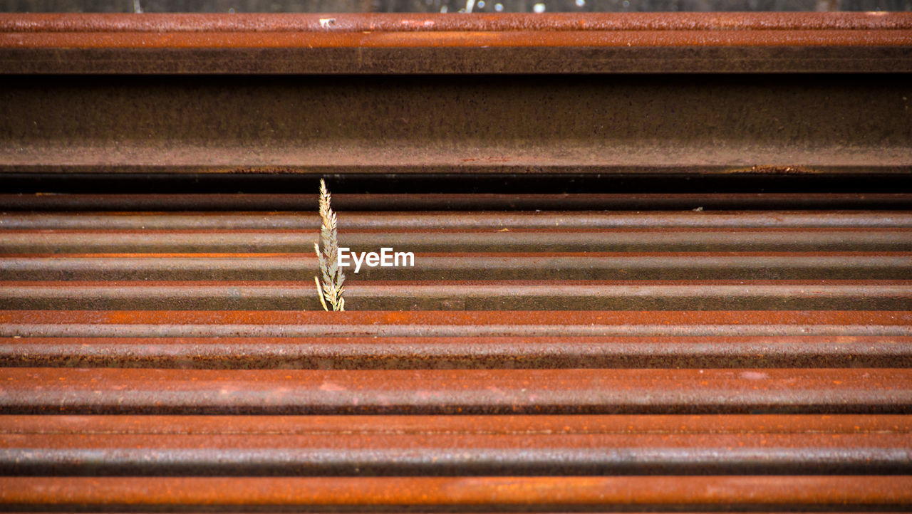 metal, pattern, no people, corrugated iron, iron, day, full frame, close-up, wood - material, rusty, textured, corrugated, backgrounds, animals in the wild, animal wildlife, outdoors, architecture, animal themes, sunlight, animal, small