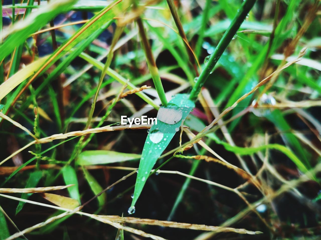 green color, day, plant, growth, close-up, grass, nature, no people, plant part, one animal, animal, invertebrate, animals in the wild, insect, focus on foreground, leaf, animal wildlife, animal themes, outdoors, selective focus, blade of grass