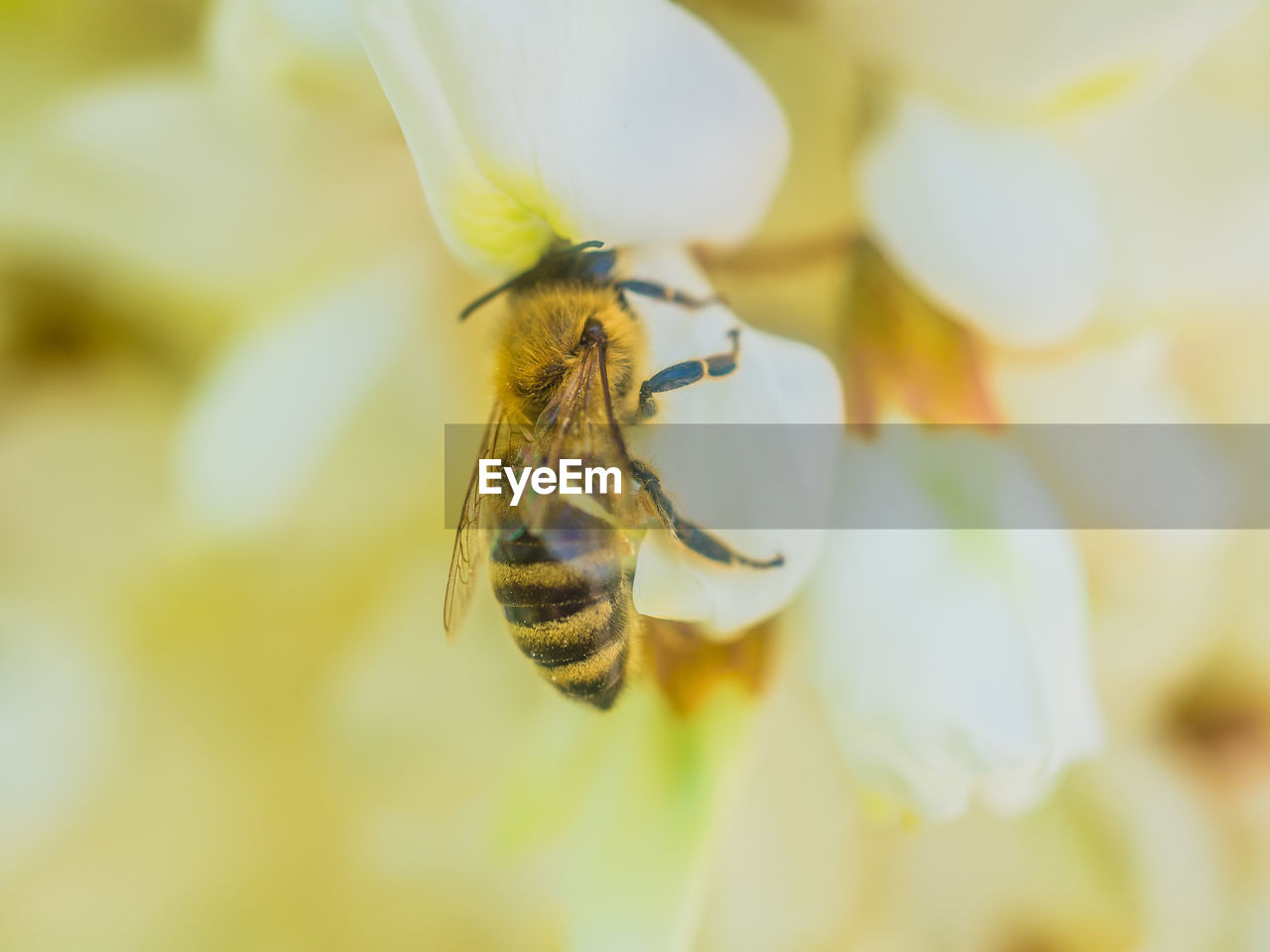 insect, invertebrate, animals in the wild, animal themes, flower, flowering plant, animal, animal wildlife, one animal, beauty in nature, fragility, close-up, vulnerability, petal, bee, plant, flower head, selective focus, growth, nature, pollination, no people, animal wing, pollen
