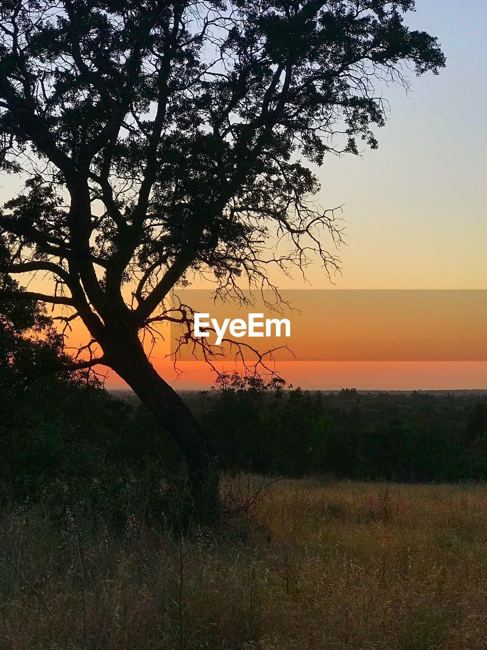 tree, sunset, sky, plant, tranquility, beauty in nature, tranquil scene, scenics - nature, silhouette, orange color, nature, landscape, no people, environment, land, growth, field, non-urban scene, branch, outdoors