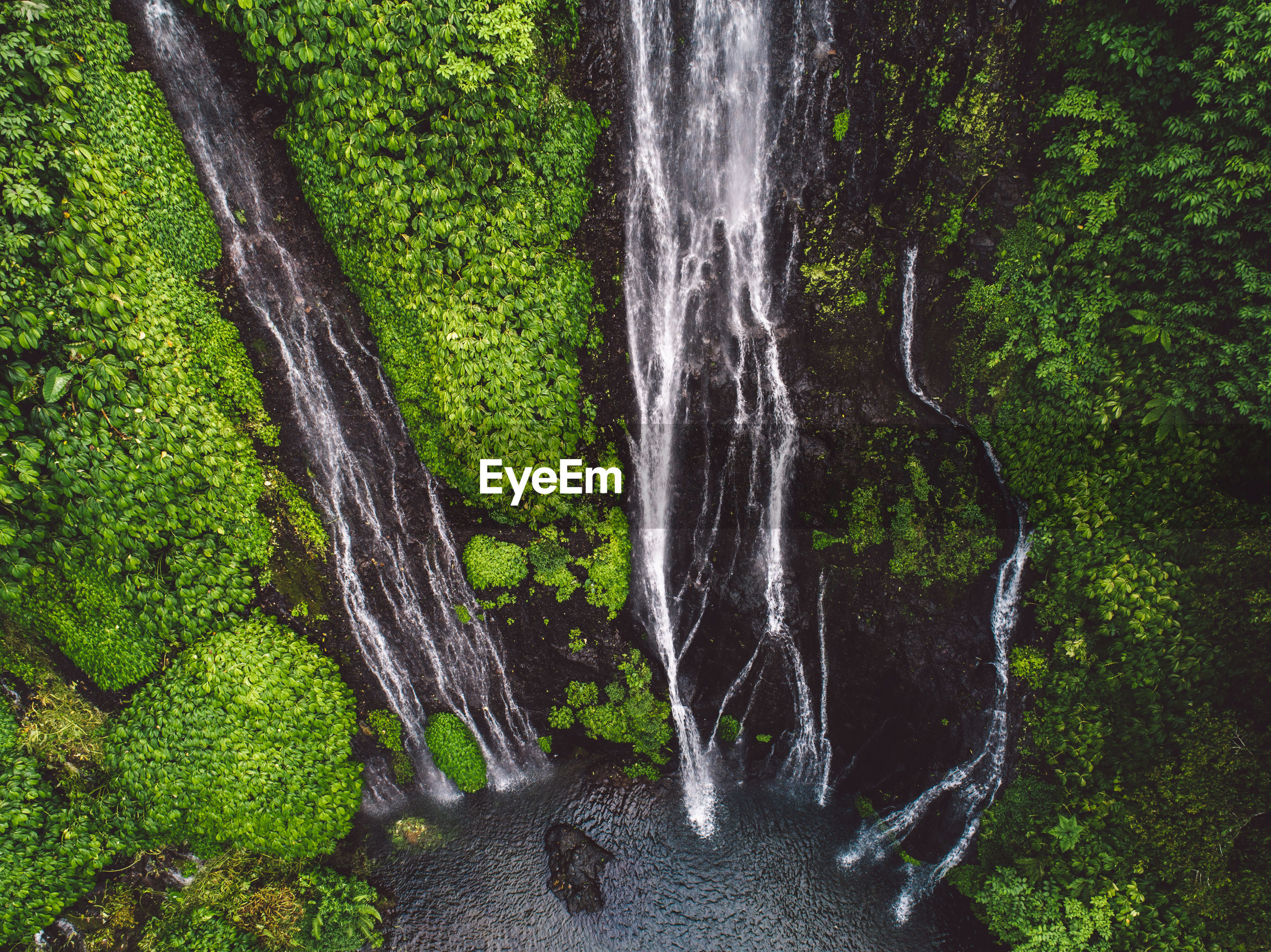 SCENIC VIEW OF WATERFALL ON TREES IN FOREST