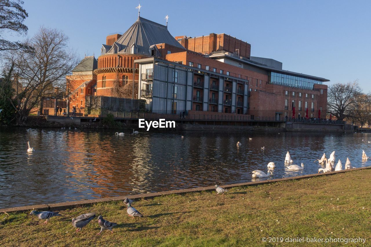 building exterior, water, built structure, architecture, bird, animal, animal themes, vertebrate, animal wildlife, nature, group of animals, building, animals in the wild, sky, lake, no people, plant, reflection, large group of animals, duck