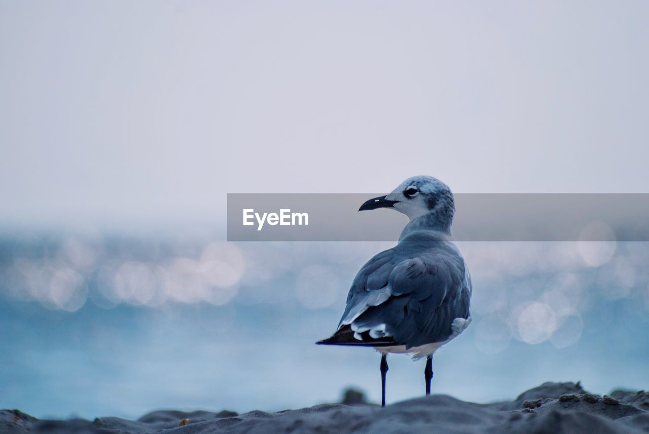bird, animal themes, vertebrate, animals in the wild, animal wildlife, animal, one animal, perching, sky, focus on foreground, seagull, sea, nature, no people, solid, water, rock, rock - object, day, beauty in nature, outdoors