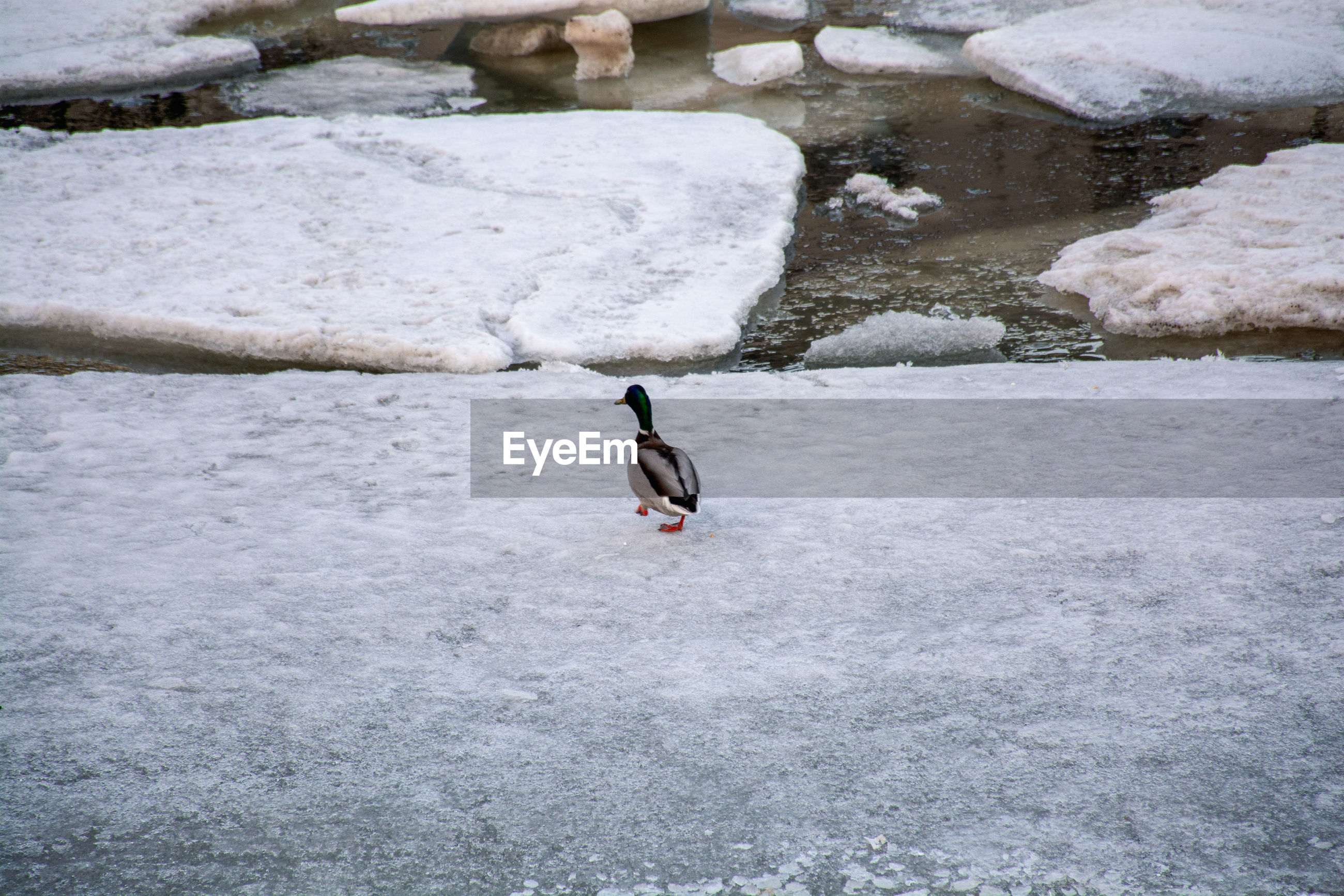 High angle view of bird in lake during winter