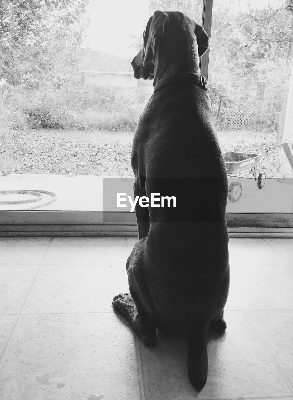 dog, one animal, animal themes, pets, domestic animals, mammal, full length, car, window, sitting, indoors, day, looking through window, no people, nature, close-up
