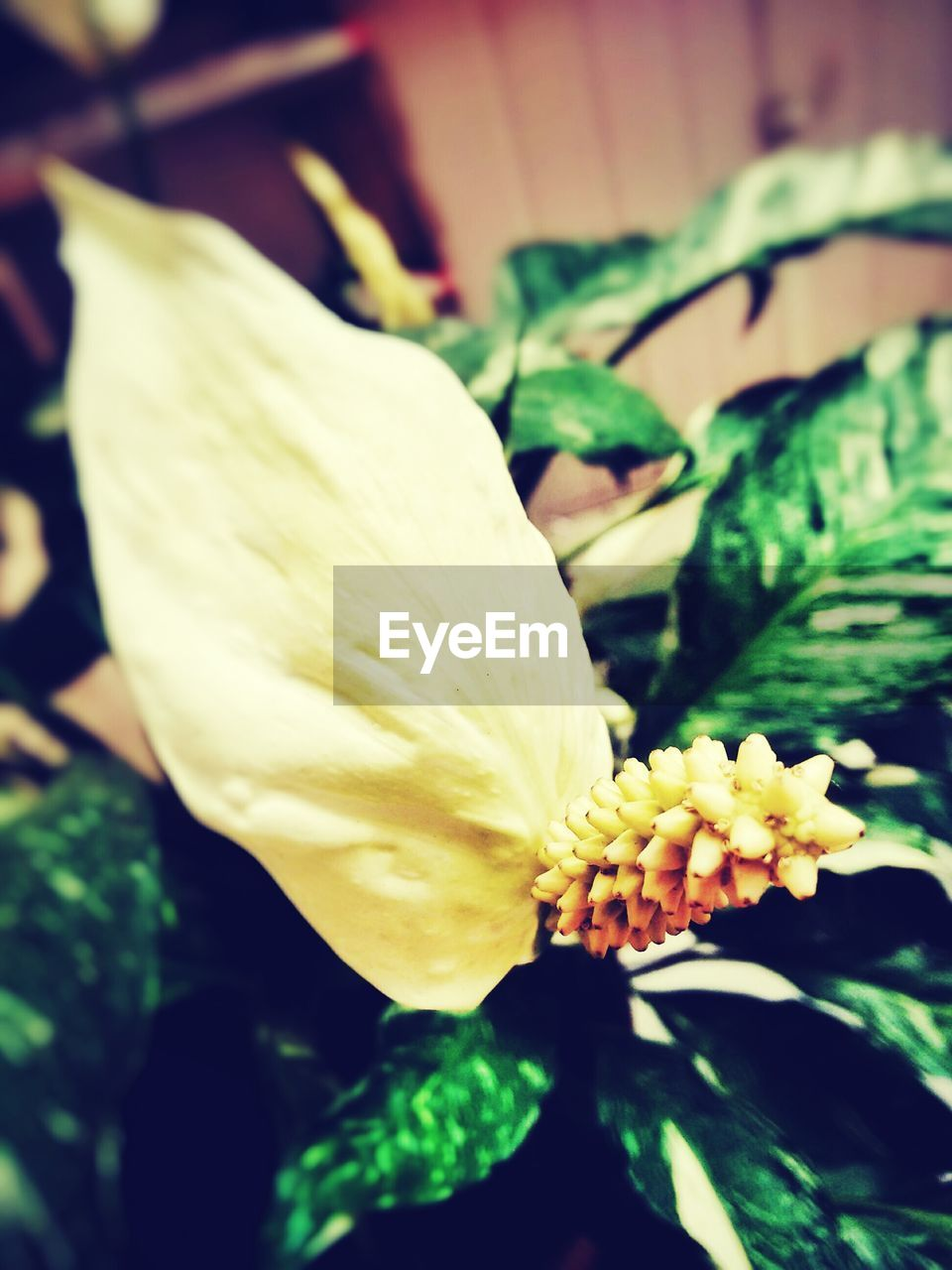 flower, petal, plant, growth, nature, beauty in nature, freshness, flower head, fragility, yellow, close-up, leaf, no people, blooming, outdoors, day