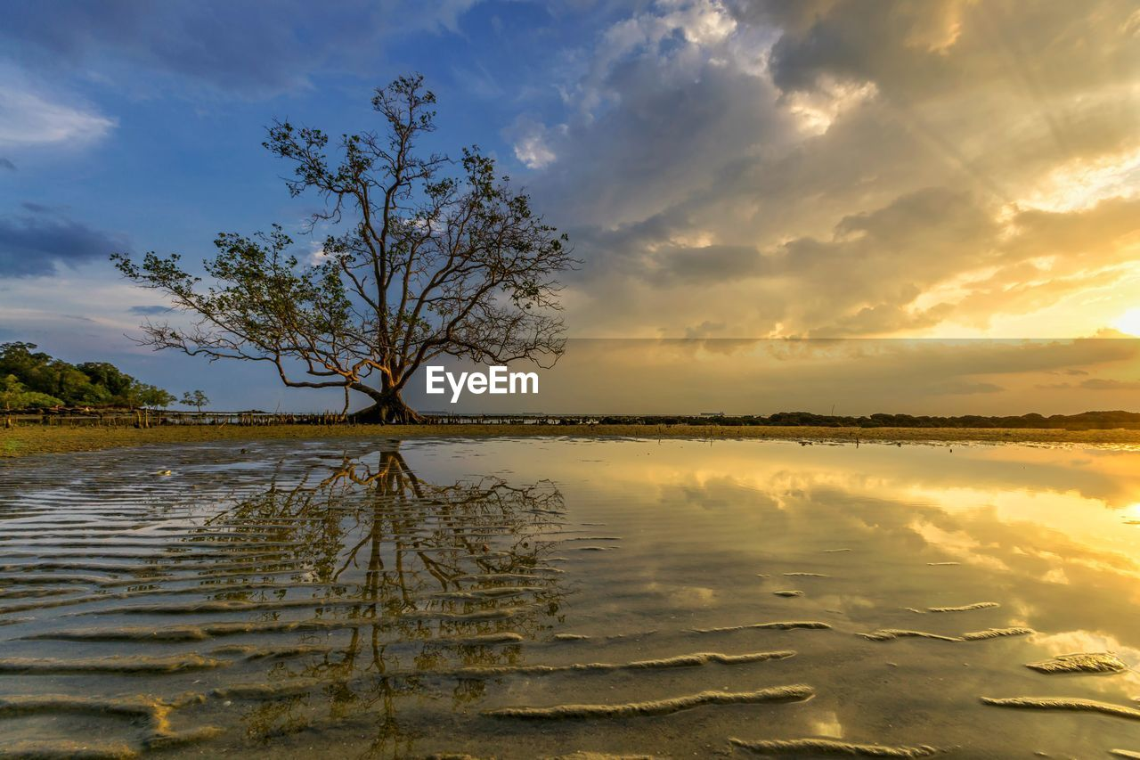 sky, water, cloud - sky, tranquility, tranquil scene, sunset, beauty in nature, tree, scenics - nature, reflection, no people, nature, lake, non-urban scene, orange color, plant, idyllic, outdoors, waterfront