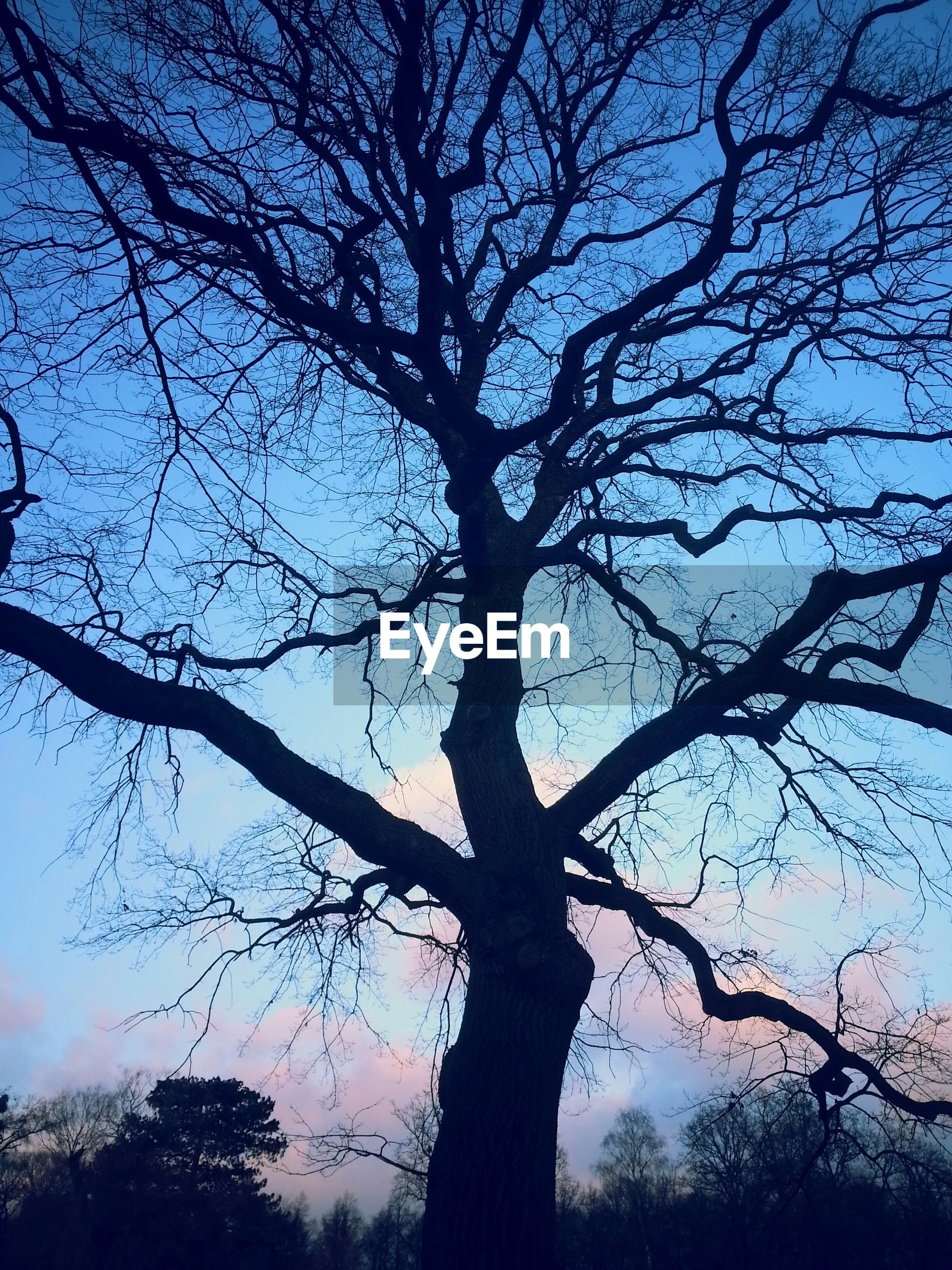 Low angle view of bare tree against the sky