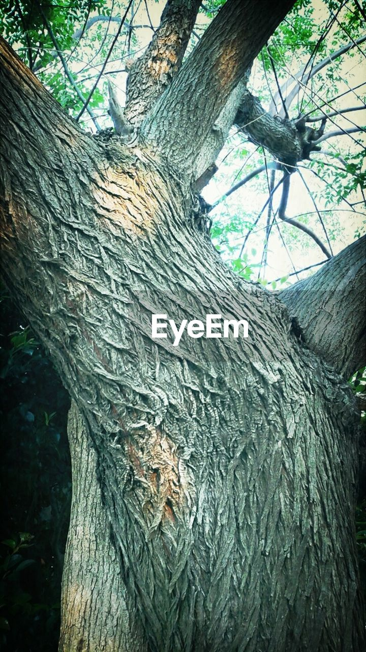 tree, tree trunk, day, no people, textured, outdoors, close-up, nature, bark, growth, low angle view, animal themes, branch