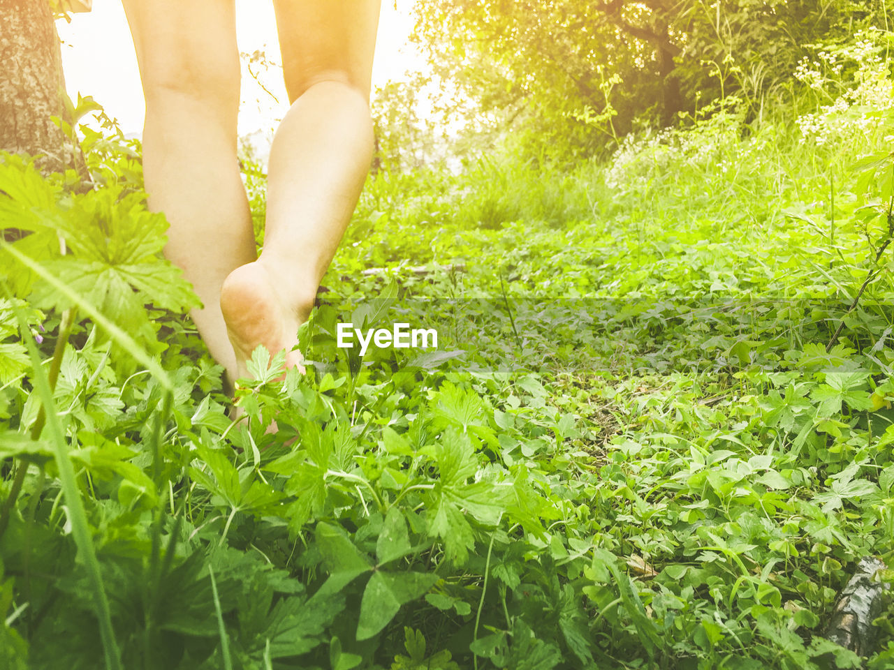 plant, one person, human body part, low section, body part, green color, growth, human leg, nature, land, leisure activity, lifestyles, day, real people, barefoot, adult, women, grass, unrecognizable person, outdoors, human foot, human limb