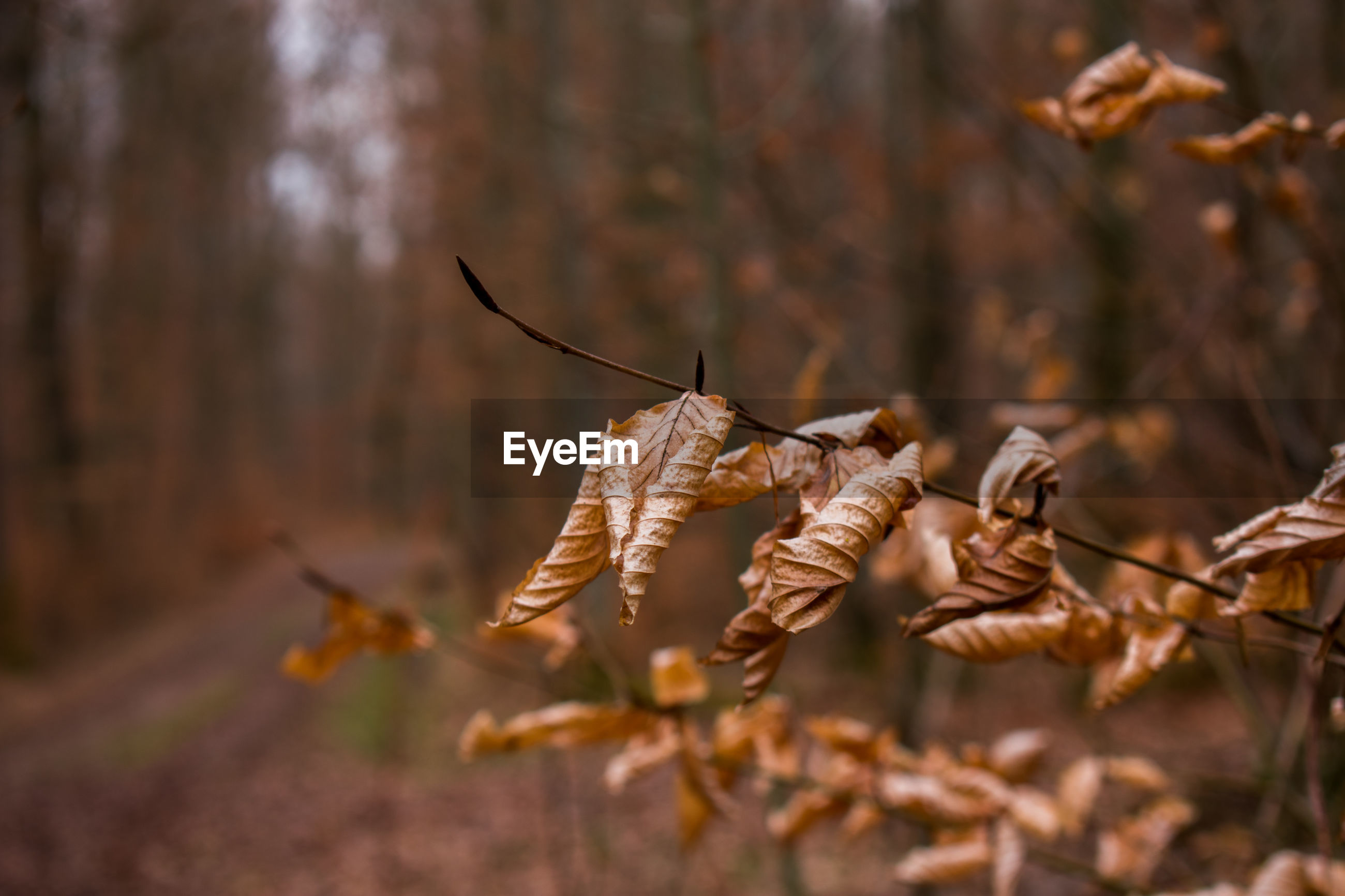 dry, focus on foreground, close-up, selective focus, no people, day, nature, plant, land, tree, outdoors, vulnerability, plant part, beauty in nature, fragility, forest, leaf, autumn, hanging, brown, dead plant, change, leaves, wilted plant, dried