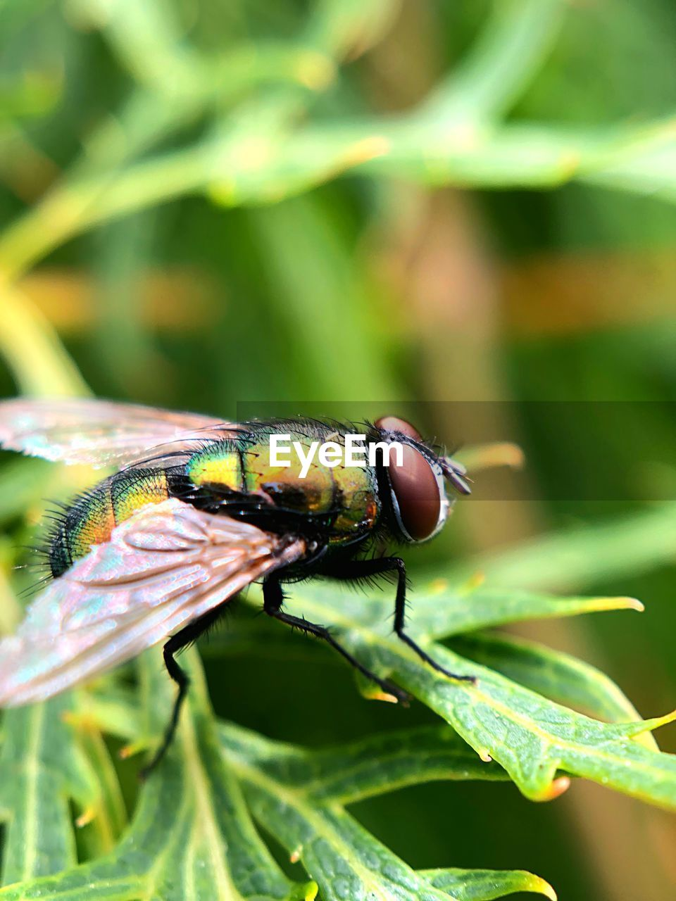 invertebrate, insect, animals in the wild, one animal, animal themes, animal wildlife, animal, close-up, green color, plant, leaf, nature, plant part, day, animal wing, fly, focus on foreground, no people, beauty in nature, growth, outdoors, pollination, animal eye