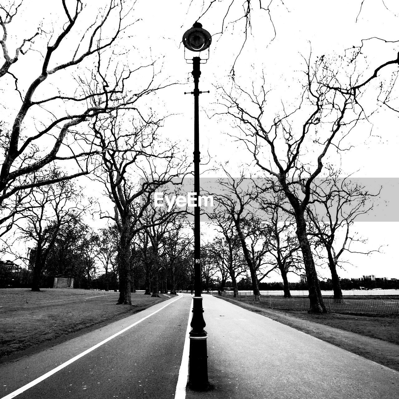 tree, bare tree, road, street, street light, plant, sky, transportation, no people, direction, nature, branch, the way forward, lighting equipment, city, day, tree trunk, outdoors, trunk, symbol, diminishing perspective