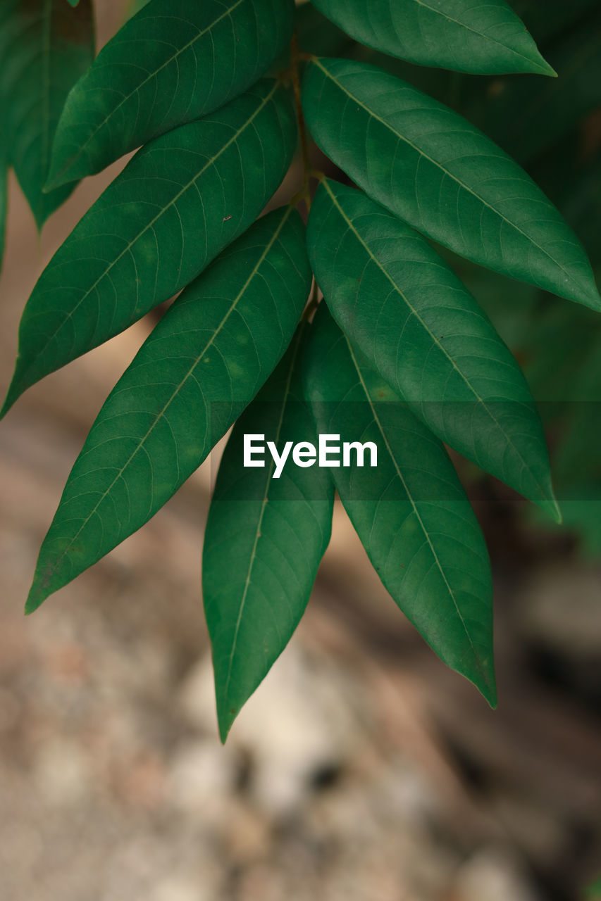 leaf, plant part, green color, plant, growth, close-up, nature, no people, focus on foreground, day, beauty in nature, outdoors, selective focus, leaf vein, leaves, natural pattern, high angle view, freshness, vulnerability, pattern