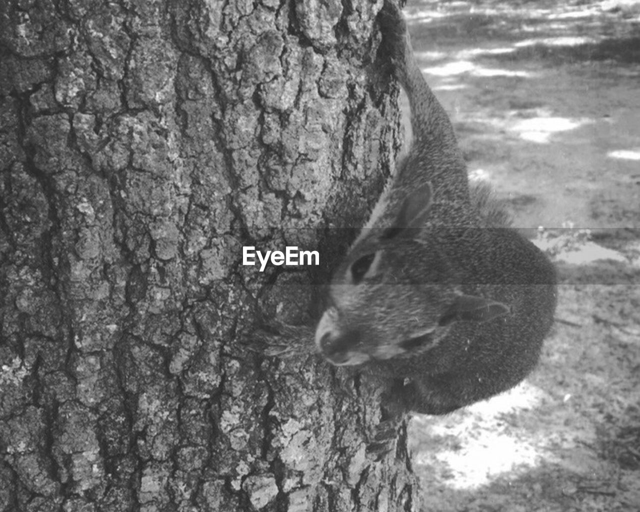animals in the wild, one animal, animal themes, squirrel, rodent, tree trunk, animal wildlife, day, wildlife, no people, nature, outdoors, mammal, tree, close-up