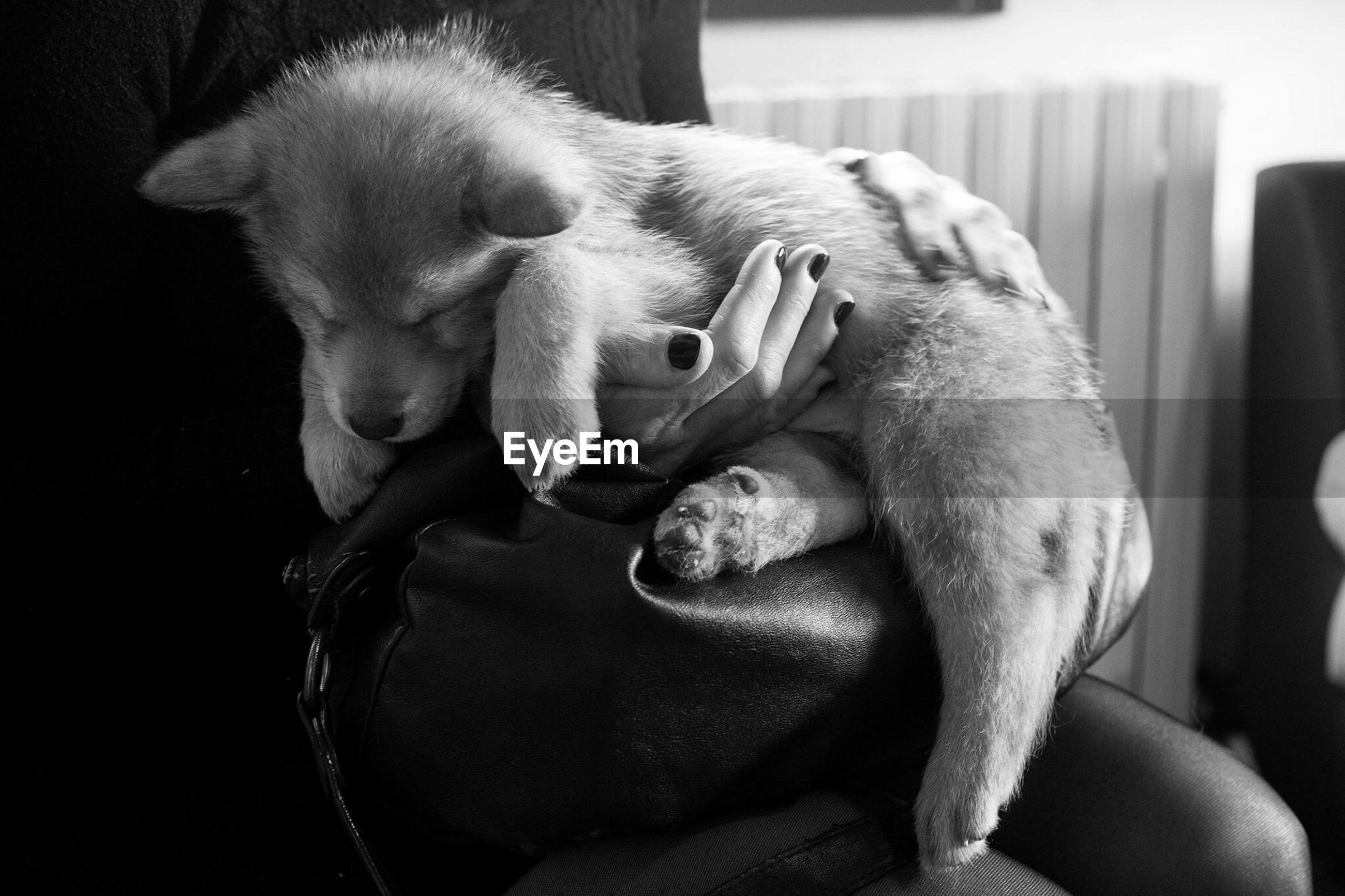 Puppy fall asleep very fast