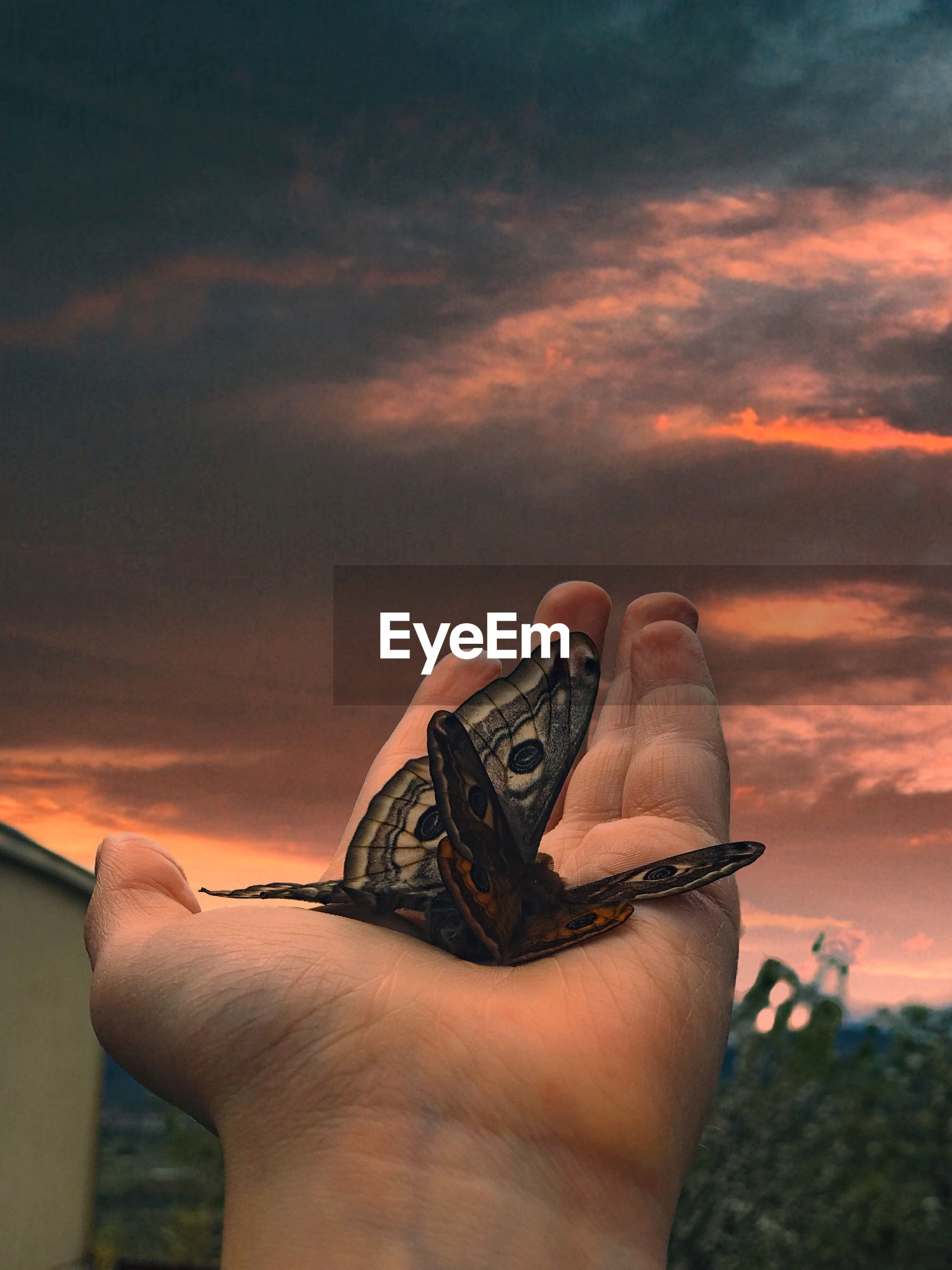 Cropped hand of person holding butterfly against sky during sunset