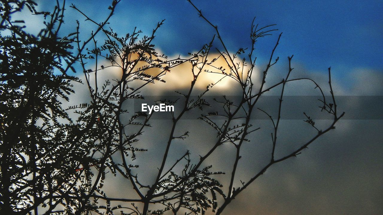 low angle view, branch, nature, no people, sky, outdoors, beauty in nature, tree, bare tree, day