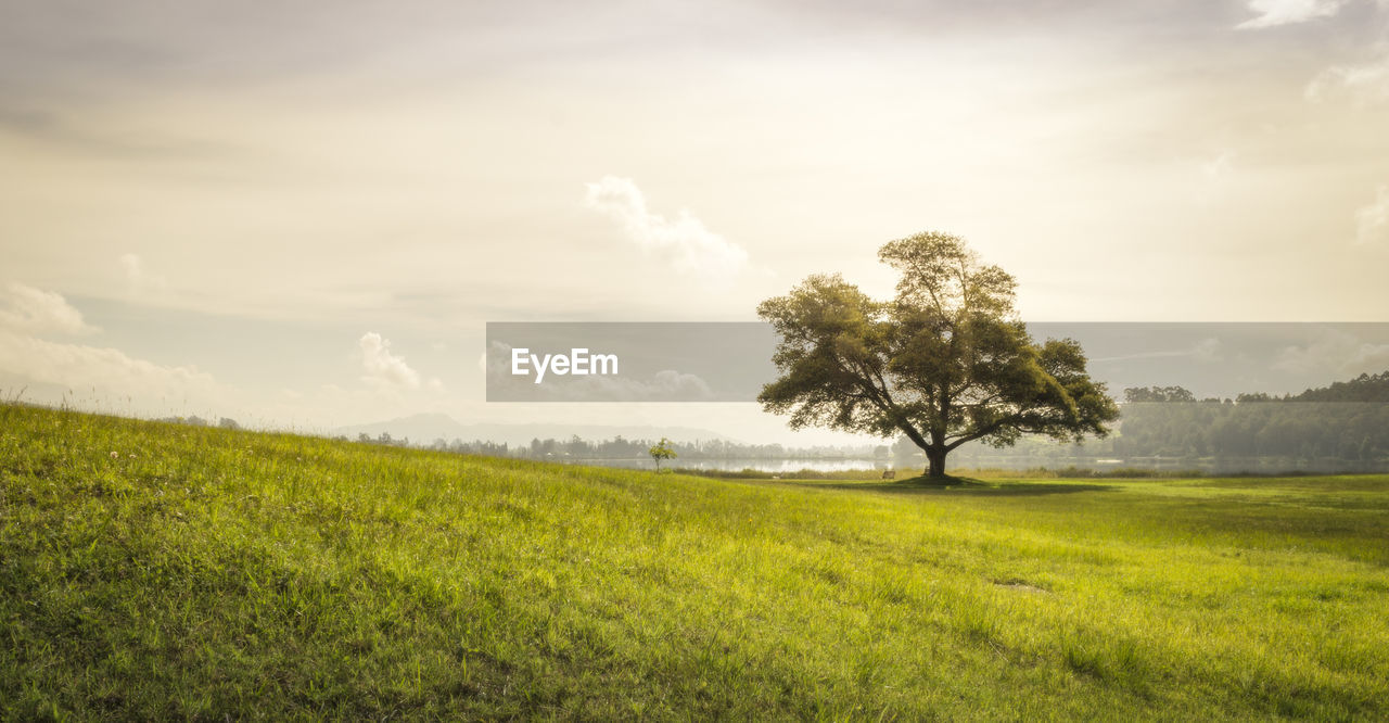 landscape, grass, field, nature, tranquility, beauty in nature, tree, tranquil scene, sky, scenics, no people, outdoors, growth, day