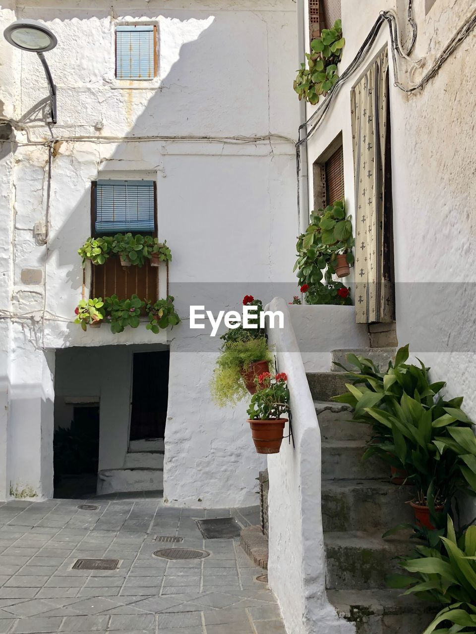 architecture, built structure, building exterior, building, plant, potted plant, growth, flower, flowering plant, nature, residential district, house, no people, day, outdoors, window, white color, flower pot, footpath, city, window box, courtyard