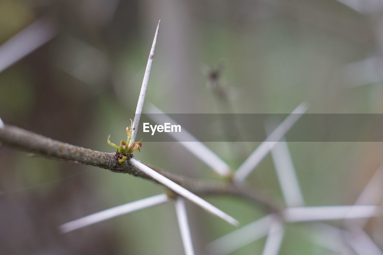 invertebrate, close-up, animal, animal themes, insect, animal wildlife, no people, one animal, focus on foreground, nature, animals in the wild, day, selective focus, plant, green color, outdoors, growth, plant stem, plant part, leaf, blade of grass