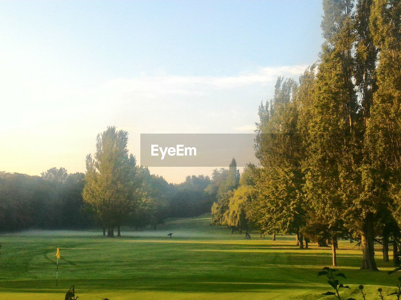 tree, nature, grass, beauty in nature, tranquility, golf, golf course, growth, tranquil scene, green color, scenics, landscape, field, sport, green - golf course, sky, day, no people, outdoors, golfer