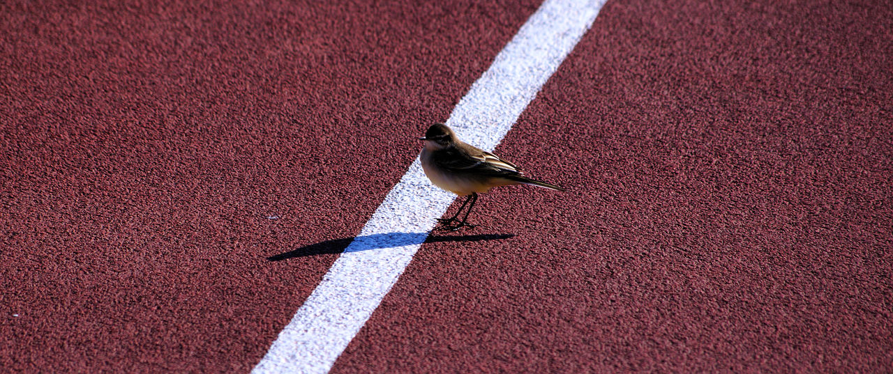 High angle view of sparrow perching on running track
