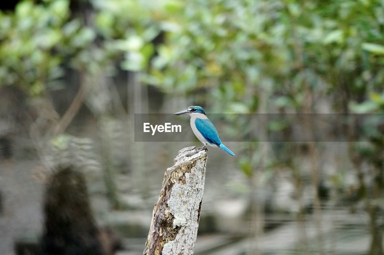 vertebrate, bird, animal themes, animal wildlife, animal, one animal, perching, animals in the wild, tree, focus on foreground, kingfisher, blue, plant, no people, day, nature, branch, outdoors, beauty in nature, wood - material, profile view, turquoise colored