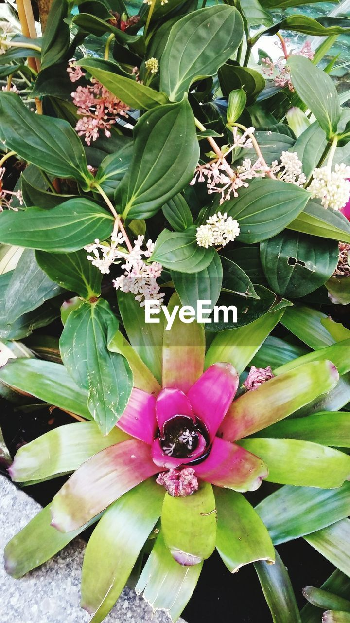 flower, fragility, petal, nature, beauty in nature, leaf, freshness, growth, green color, plant, flower head, day, no people, pink color, outdoors, blooming, close-up