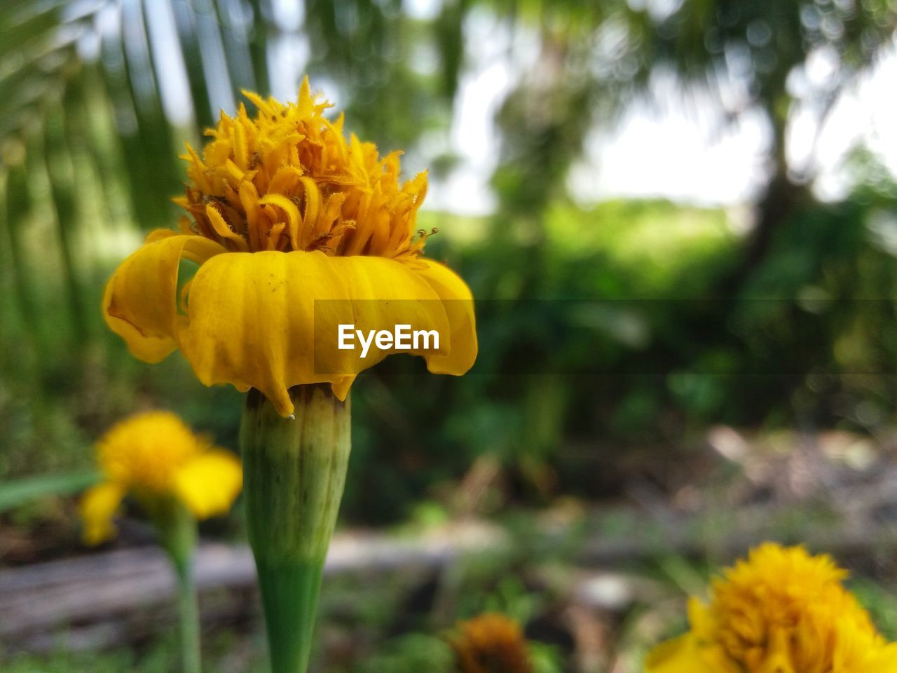 flower, yellow, growth, fragility, freshness, beauty in nature, petal, nature, flower head, no people, plant, outdoors, day, focus on foreground, blooming, close-up, springtime