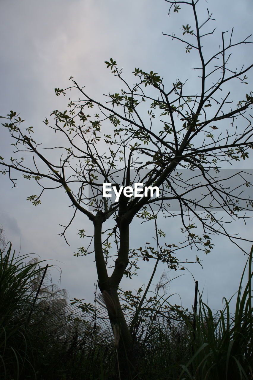 plant, tree, sky, branch, nature, no people, growth, beauty in nature, tranquility, low angle view, silhouette, day, cloud - sky, outdoors, scenics - nature, tranquil scene, non-urban scene, leaf, plant part, bare tree