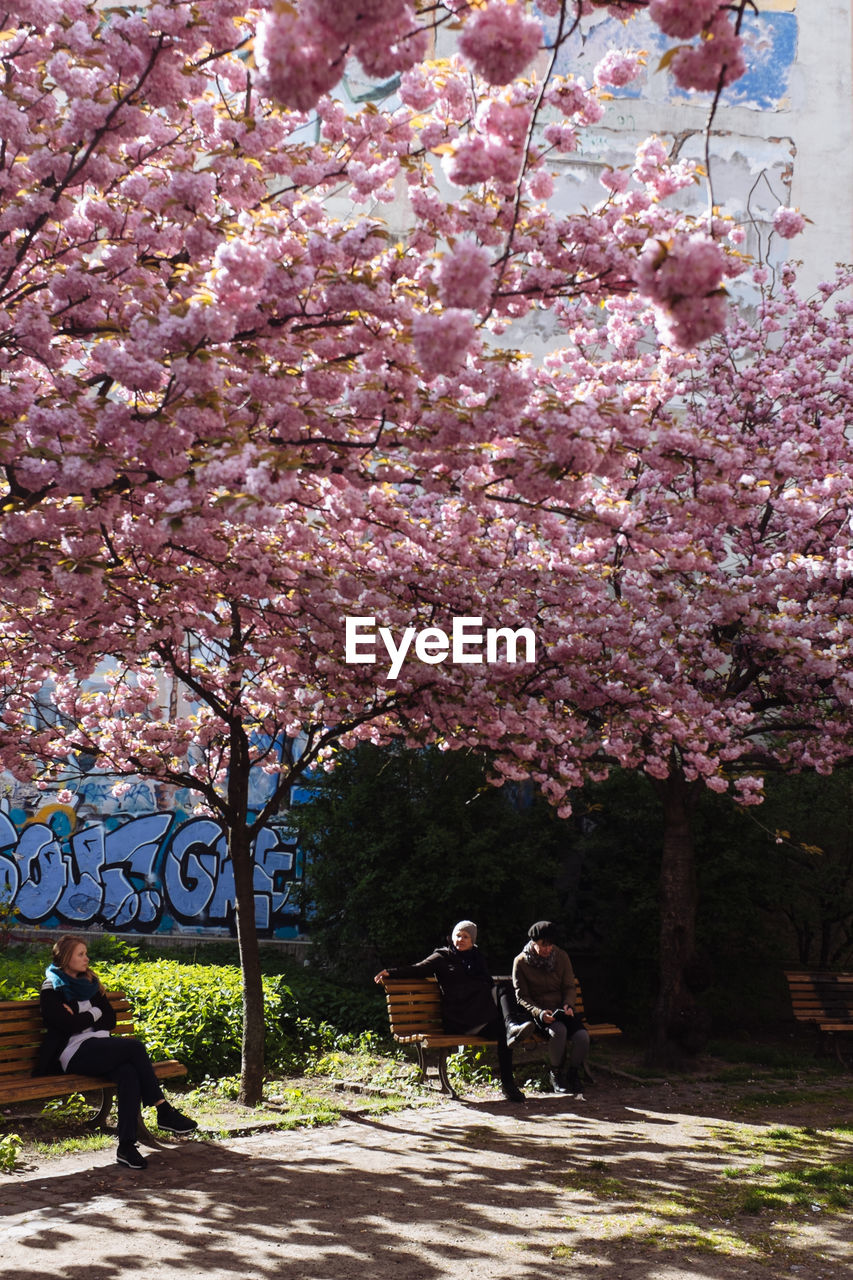 People sitting on bench under cherry tree at park
