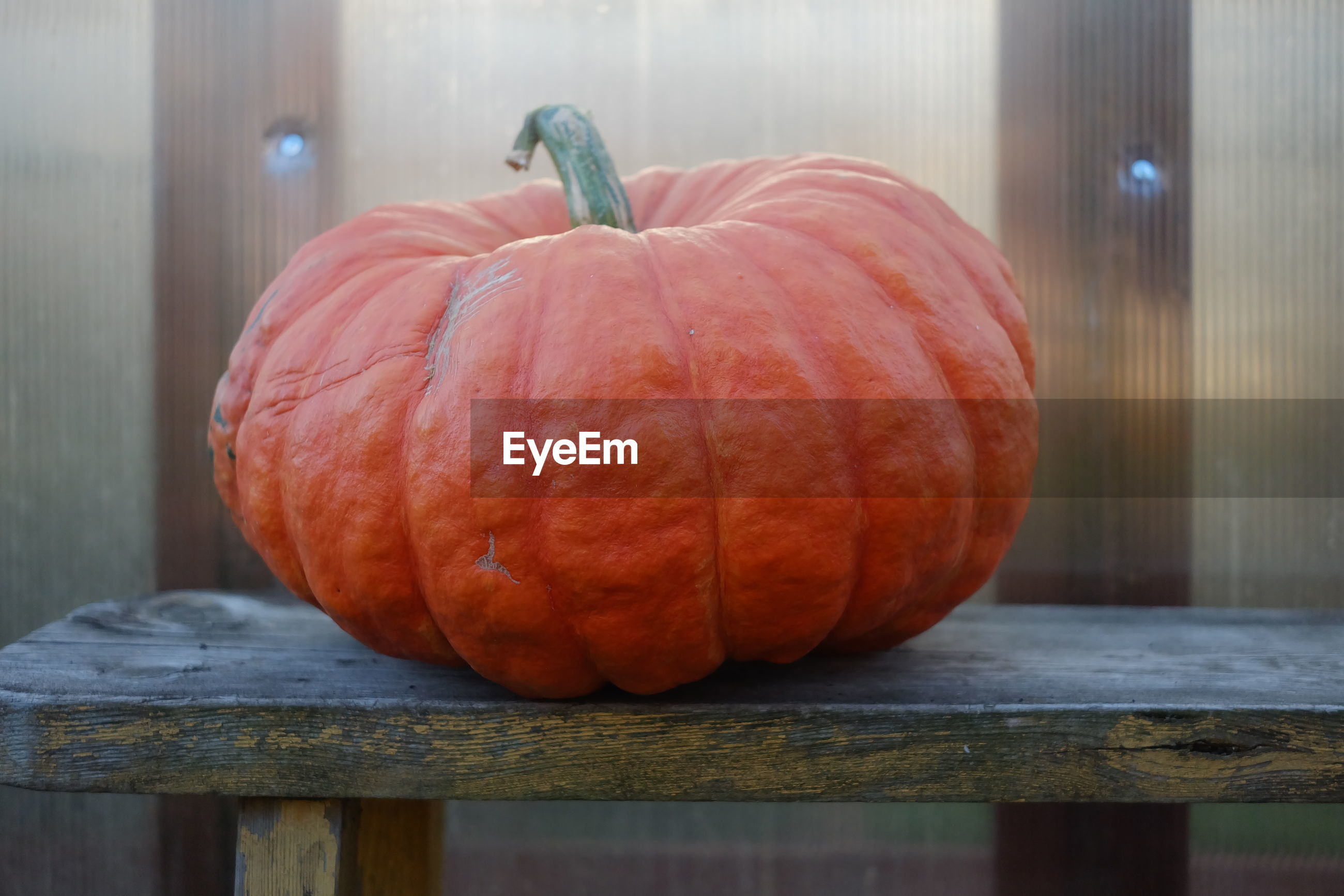 Close-up view of pumpkin on table