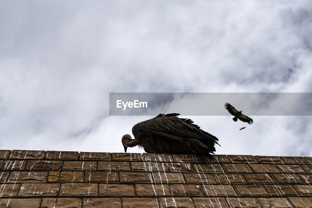 Low angle view of vulture on wall against cloudy sky