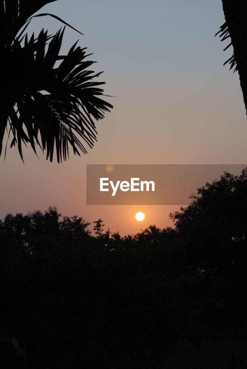 sky, sunset, silhouette, tree, plant, beauty in nature, orange color, sun, scenics - nature, nature, tranquility, no people, growth, tranquil scene, outdoors, clear sky, copy space, idyllic, palm tree, leaf, palm leaf