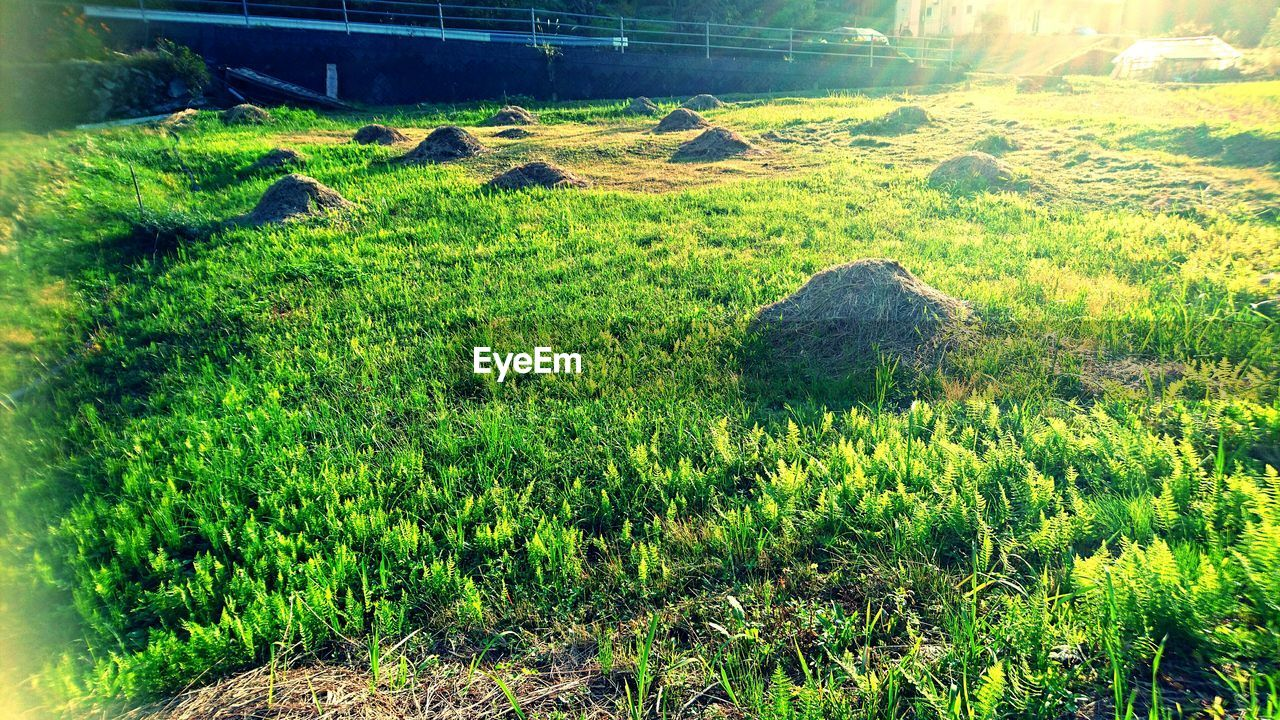 plant, green color, growth, land, nature, tranquility, field, beauty in nature, landscape, scenics - nature, day, no people, tranquil scene, grass, environment, sunlight, rural scene, high angle view, tree, outdoors, plantation
