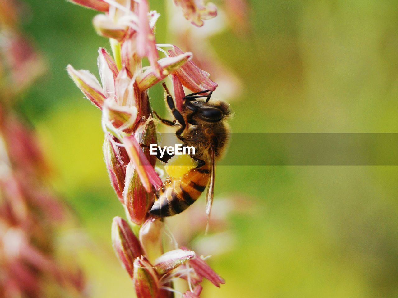 insect, one animal, animal themes, animals in the wild, nature, no people, growth, close-up, outdoors, beauty in nature, animal wildlife, day, plant, focus on foreground, bee, flower, pollination, fragility, freshness