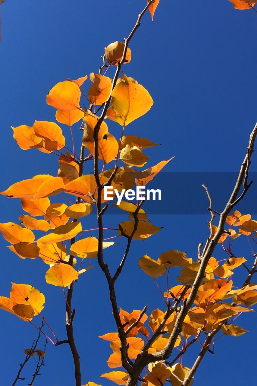 growth, nature, low angle view, clear sky, branch, leaf, outdoors, day, beauty in nature, no people, tree, flower, blue, fragility, freshness, close-up, sky