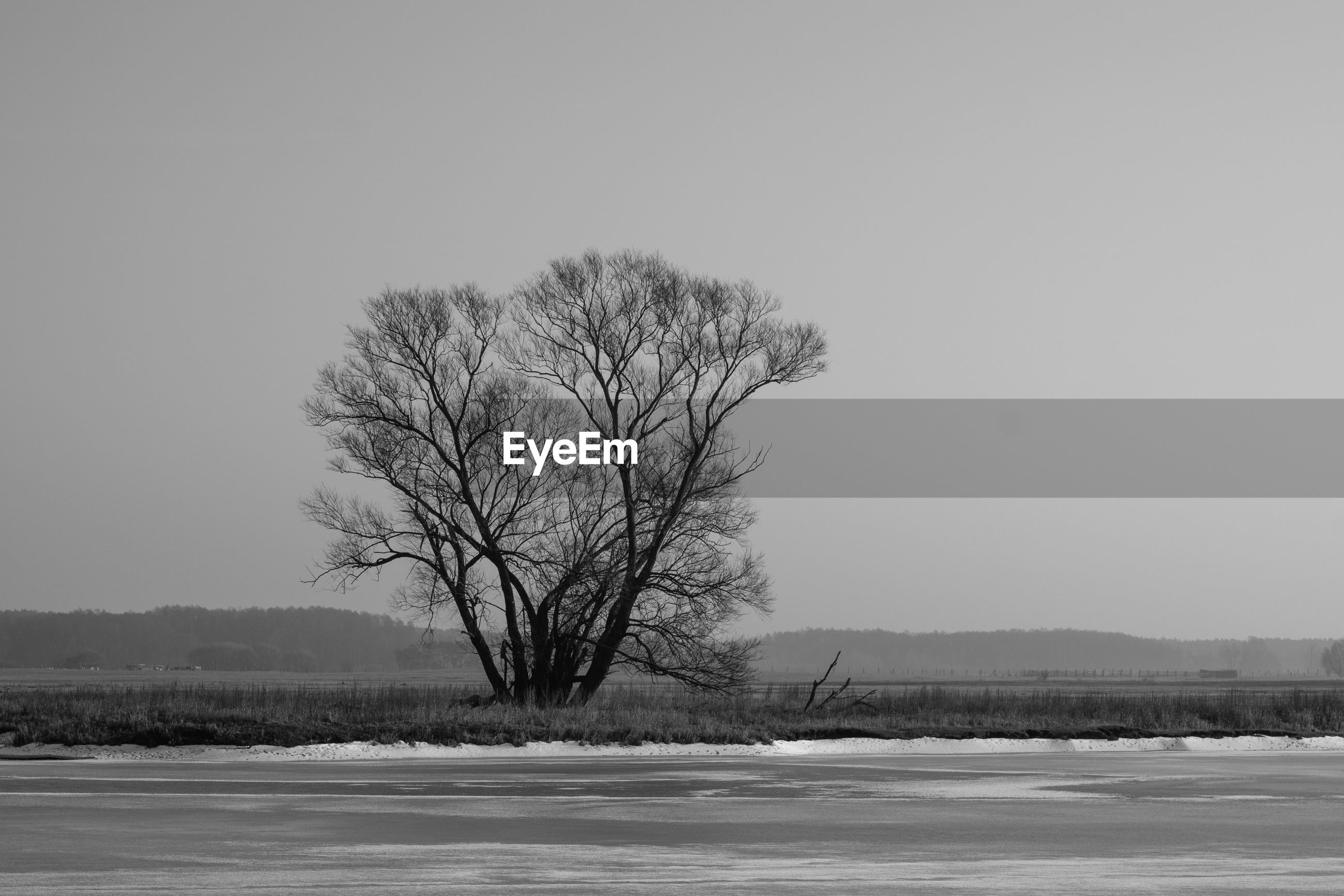 BARE TREE ON FROZEN LANDSCAPE AGAINST CLEAR SKY