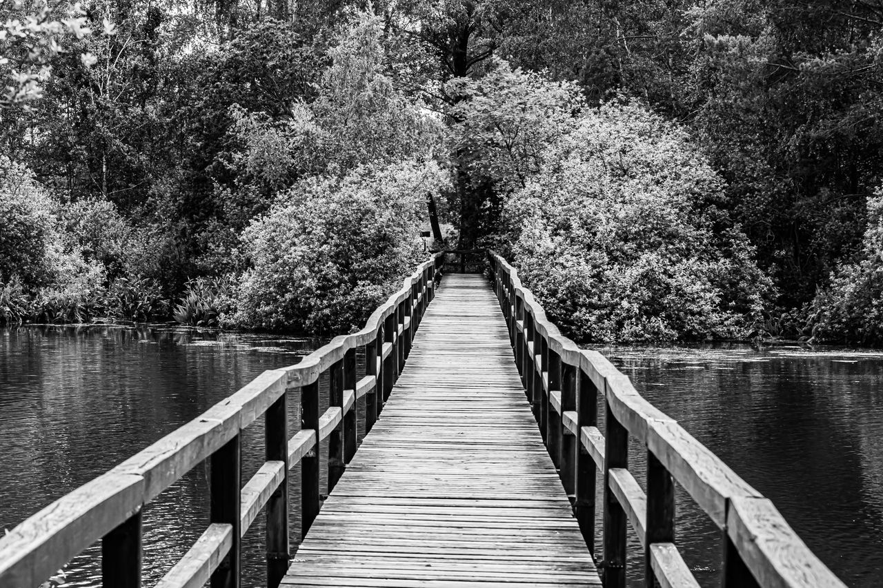 tree, water, plant, the way forward, direction, connection, bridge, railing, lake, nature, beauty in nature, wood - material, day, built structure, tranquility, pier, footbridge, architecture, outdoors, no people, diminishing perspective, bridge - man made structure, wood paneling, long