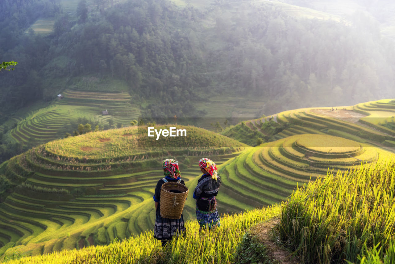 farm, agriculture, rice - cereal plant, rice paddy, curve, horticulture, terraced field, field, rough, environment, environmental conservation, valley, mountain, plant, landscape, farmer, rice - food staple, social issues, growth, nature, travel, two people, food, adult, men, outdoors, people, young adult, adults only, day