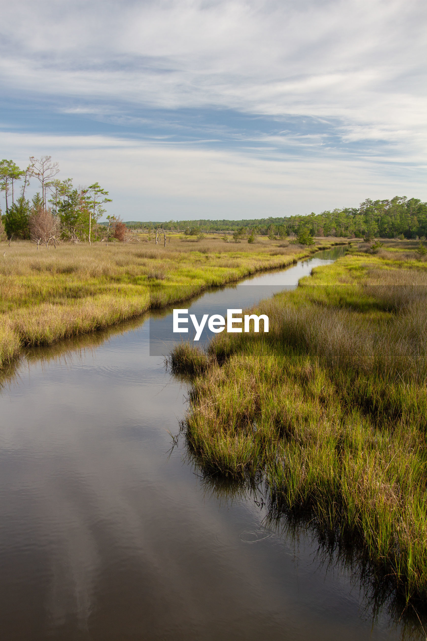 Scenic view of mash and wetlands. croatan national forest, outer banks, north carolina
