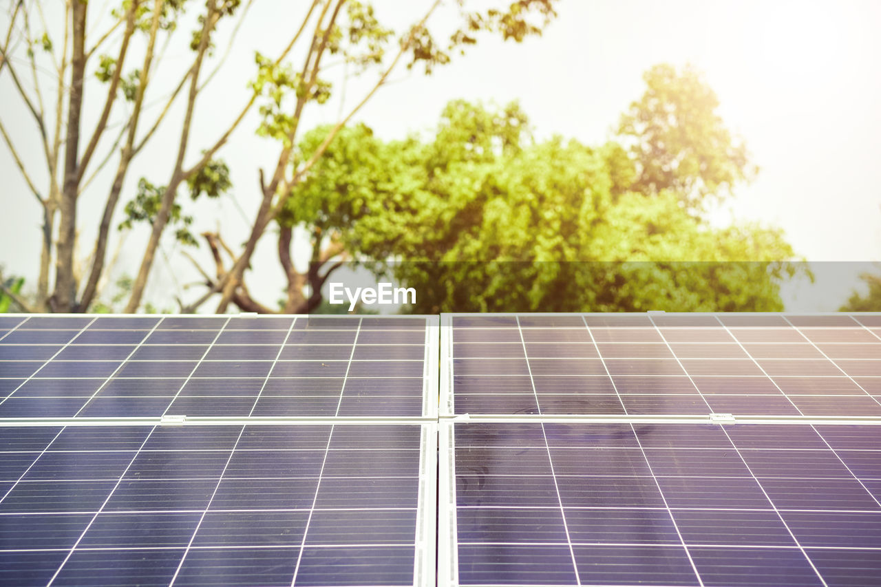 solar energy, renewable energy, solar panel, alternative energy, fuel and power generation, environmental conservation, environment, plant, sky, nature, technology, tree, day, outdoors, no people, sustainable resources, focus on foreground, sunlight, pattern, green color, power supply