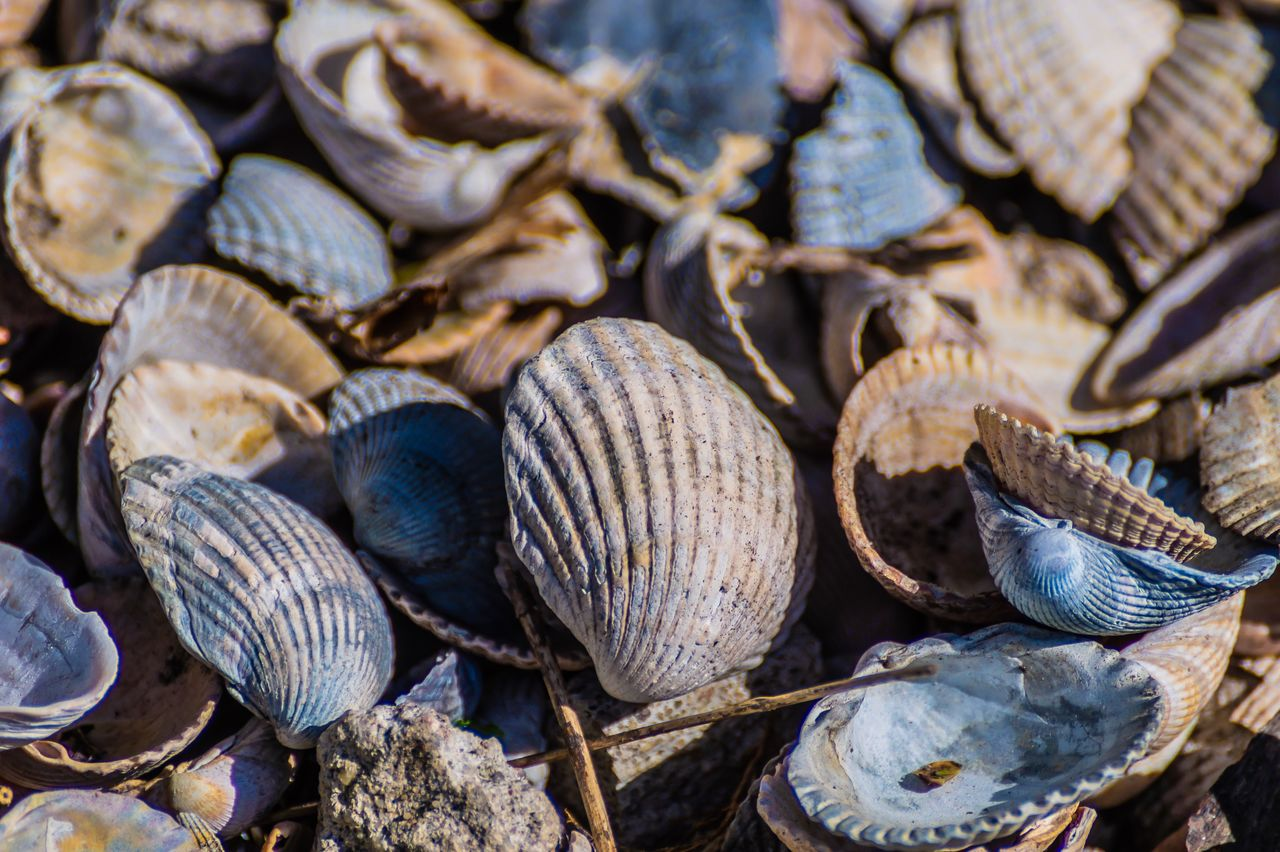 close-up, shell, no people, large group of objects, animal wildlife, animal shell, day, animal, seashell, full frame, abundance, selective focus, backgrounds, nature, textured, still life, seafood, outdoors, food, food and drink